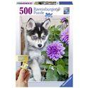 Puzzle 500 tenero husky - 26913682