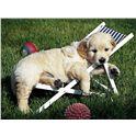 Puzzle 500 cuccioli a riposo - 26914179