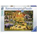Puzzle 2000 reunion en la selva - 26916702